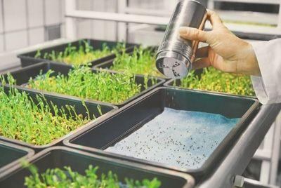 IKEA предлагает выращивать овощи в домашних условиях