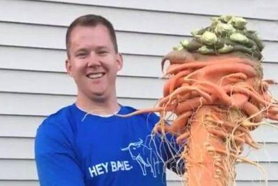 Американец вырастил гигантскую морковь весом более 10 кг