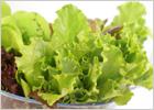 Зелёные салаты
