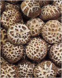 Шиитаке, грибы шиитаке