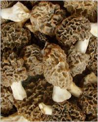 Сморчки грибы афродизиак  - афродизиаки в кулинарии