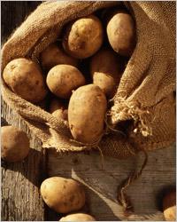 Картофель: земляные яблоки