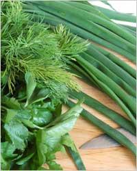 TOP 10 продуктов для красивых зубов - Зелень (петрушка, салат латук, лук, укроп, сельдерей)