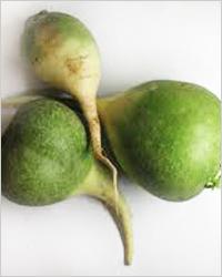 зелёная редька