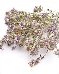 полезные травяные чаи для похудения