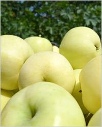 Компот из яблок и ревеня