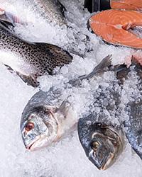 Общие принципы хранения и приготовления рыбы