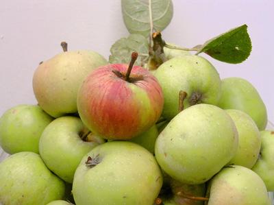 Бодрящие яблоки