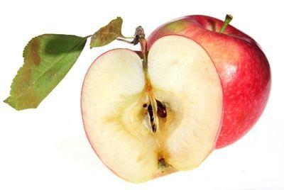 produkt-gennoj-inzhenerii--yabloko-ne-temneyushhee-na-sreze