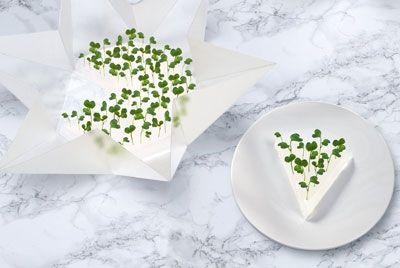 mikro-sady-dlya-svezhej-zeleni