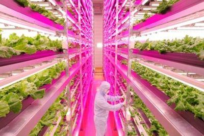 Самая эффективная теплица повысила урожай салата в 100 раз