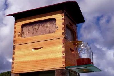Изобретён улей, сливающий мёд через кран