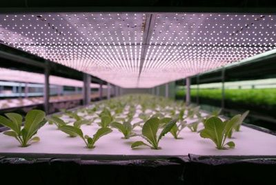 В Японии появятся автоматизированные фермы по выращиванию салата