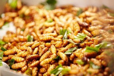 Анджелина Джоли рекомендует есть насекомых