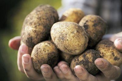 В Японии разразился картофельный кризис