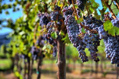 Брат шведского короля будет производить вино в Крыму