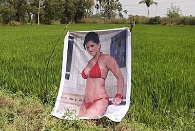 Индийский фермер защищает урожай с помощью плаката актрисы