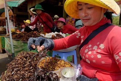 Популярная камбоджийская закуска из жареных тарантулов находится под угрозой исчезновения