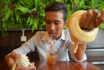В столице Камбоджи открылось кафе с рептилиями