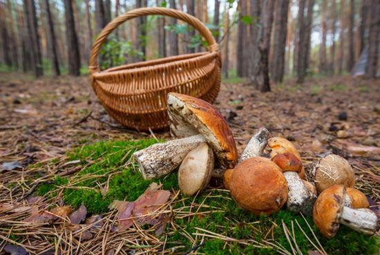 В Удмуртии прошел грибной фестиваль