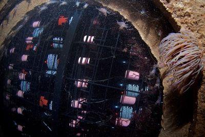 «Подводное» вино набирает популярность