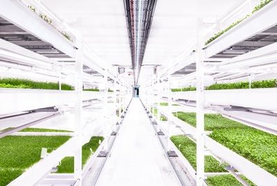 Первая в мире подземная ферма приглашает на экскурсии