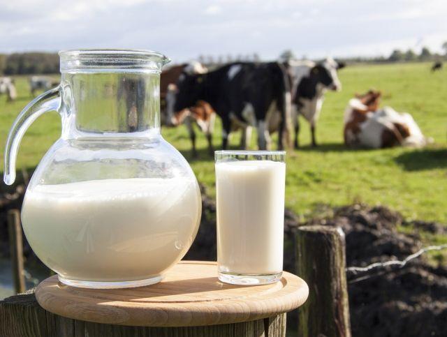 В Рязанской области состоится молочный фестиваль За Окой пасутся ко…