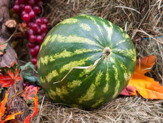 В Астрахани отметят День арбуза
