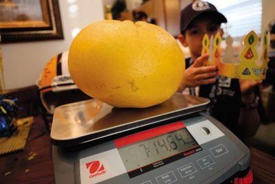 Американская семья вырастила гигантский грейпфрут