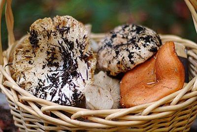 В Испании нашли гигантский гриб
