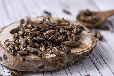 Тайский повар превращает насекомых в изысканные блюда
