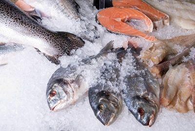 Российские ученые создали индикатор для определения повторной заморозки рыбы