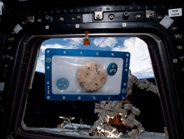 Приготовленное в космосе печенье прибыло на Землю