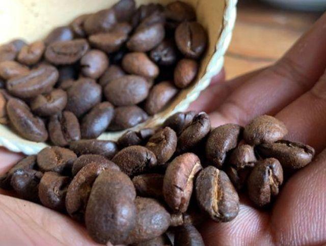 На Мадагаскаре продают кофейные зерна, надкусанные летучими мышами