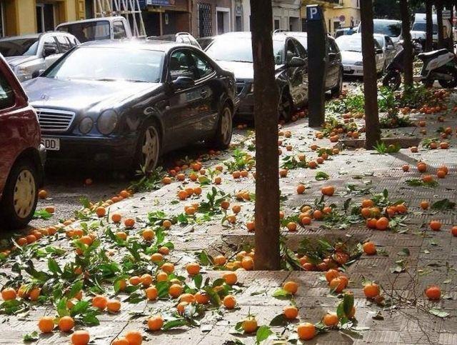 В Испании апельсины будут использовать для выработки электроэнергии