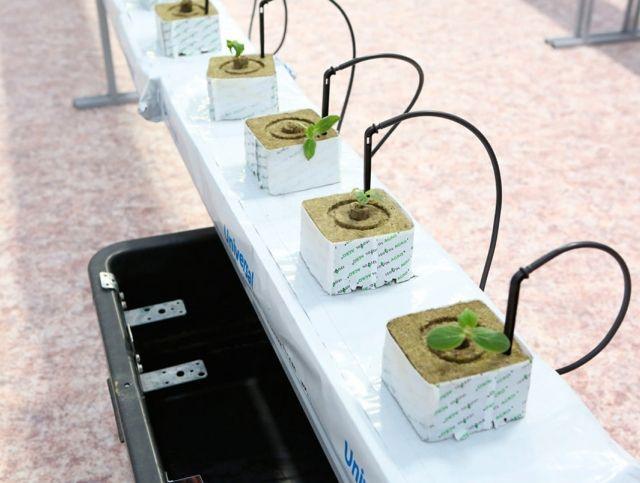Ученые из Сибири готовятся к выращиванию овощей в космосе