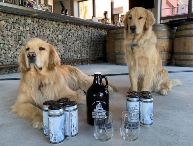 Американская пивоварня доставляет пиво с помощью собак