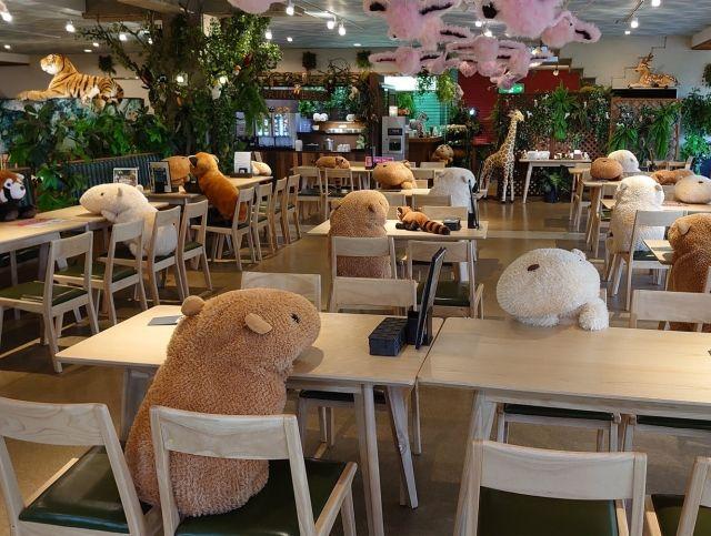 Кафе при японском зоопарке использует игрушечных животных для обеспечения социальной дистанции