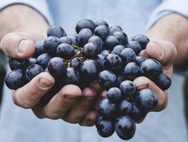 Производителям шампанского придется выбросить тонны неиспользованного винограда
