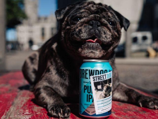 Шотландская пивоварня выпустила коллекцию пива в поддержку бездомных собак