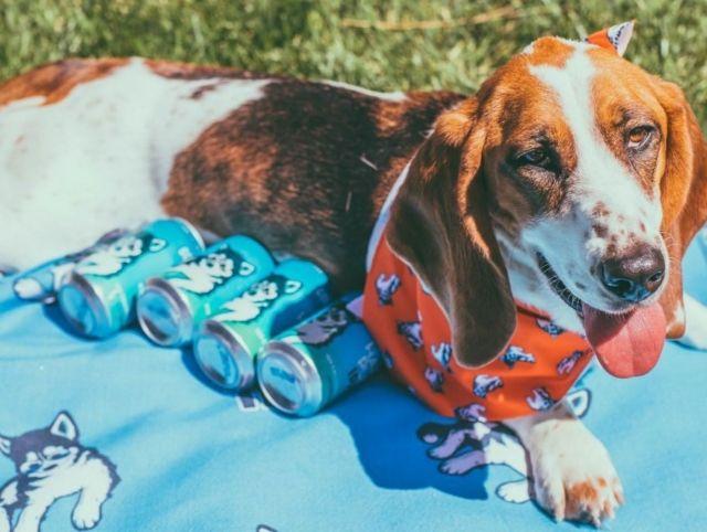 Калифорнийская пивоварня организовала доставку пива с помощью бездомных собак