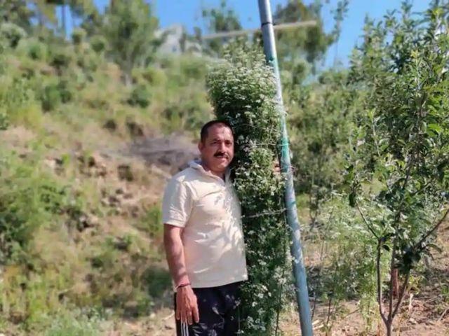 Индийский фермер вырастил кориандр рекордного размера