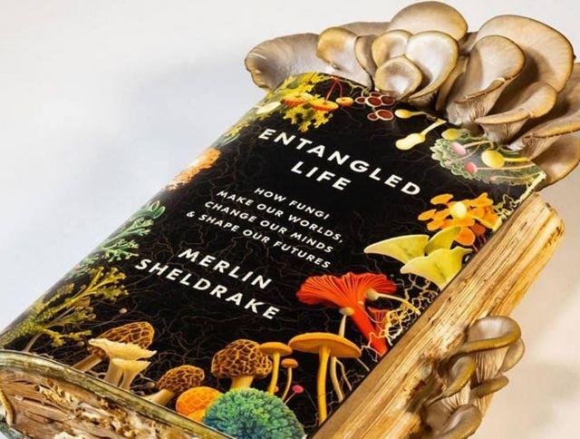 Кембриджский  ученый съел грибы, выросшие в его книге