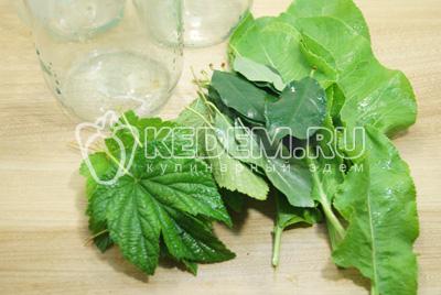 Листья и банки хорошо вымыть и обсушить. Сложить по три листа смородины и вишни в каждую банку и по одному листу хрена (большие можно разрезать).